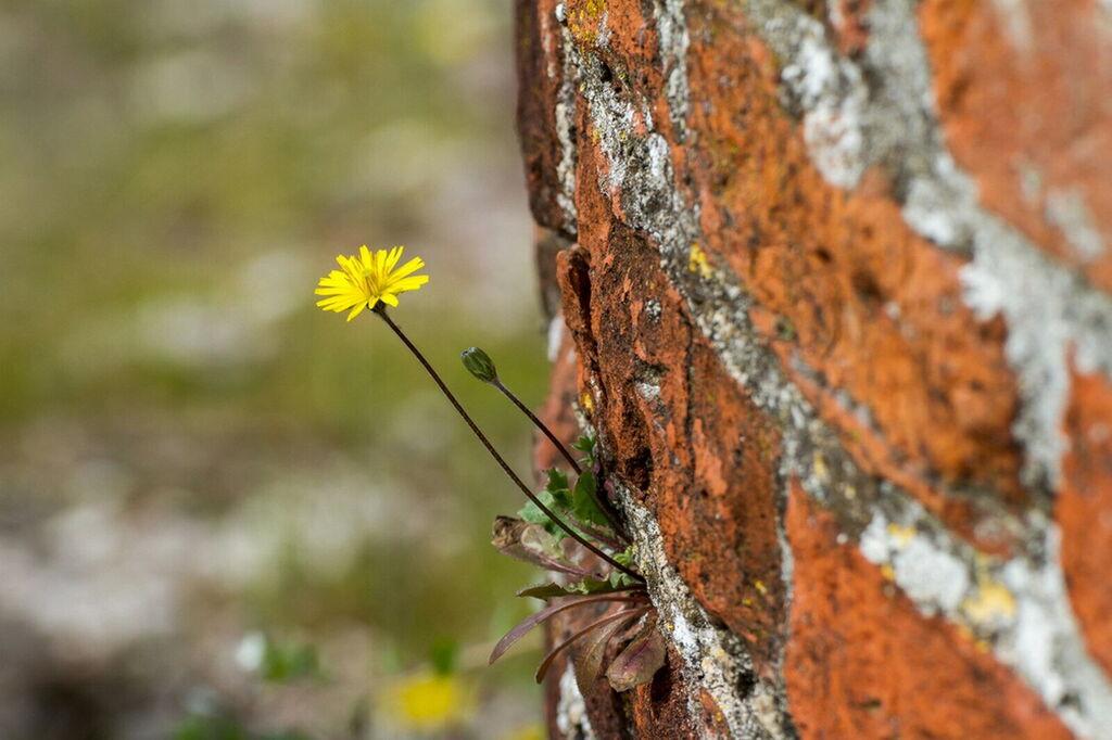 květinová toskánsko