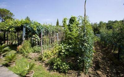 Villa Celeste: il nostro orto: coltiviamo per Voi tanta verdura e frutta di stagione!