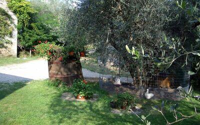 Fattoria Le Poggiola: garden