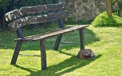 Fattoria Le Poggiola: old chair in the garden