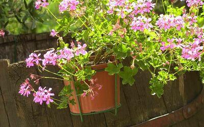 Fattoria Le Poggiola: flowers