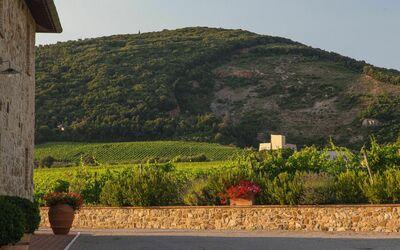 Villa Casanova: View to our wine cellar