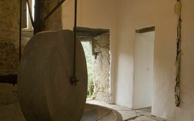 Podere Torremozza: Our own olive press
