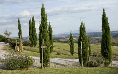 La Casa Del Sole Di Siena: The Condo garden