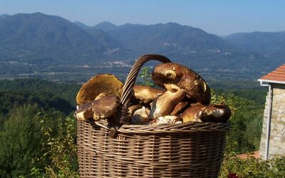 Casa Donati: A lucky day looking for mushrooms in the woods