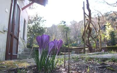 Villa Agrifogli