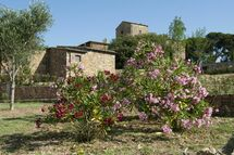 Antico Borgo Casalappi, Country Resort for rent in Casalappi, Tuscany