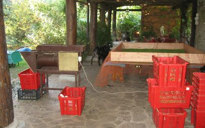 Villa Maria Doria: Harvest time