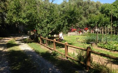 Villa Maria Doria: Vegetable Garden in the Olive Grove