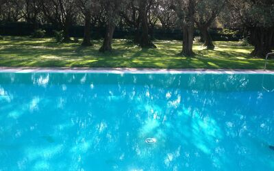 Villa Maria Doria: Swimming Pool in the Olive Grove
