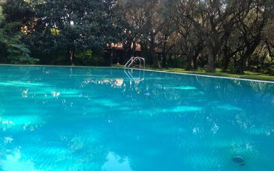 Villa Maria Doria: swimming pool ( 6 x 13 ) in the olive grove