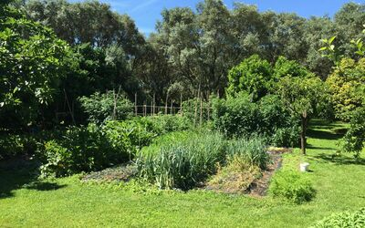 Villa Maria Doria: Vegetable Garden
