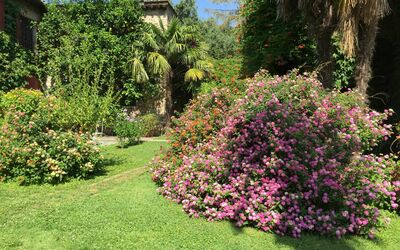Villa Maria Doria: Flowers in the front garden