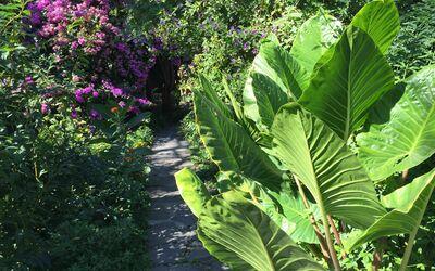 Villa Maria Doria: Garden
