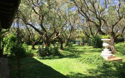 Villa Maria Doria: 500 year old olive grove