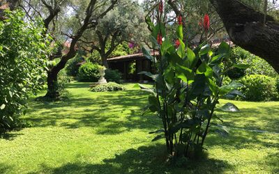 Villa Maria Doria: Ancient Olive Grove