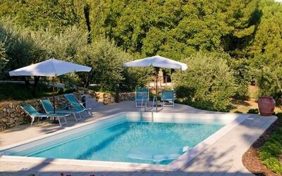 Gli Appartamenti Di Manuela: our pool surrounded by olives