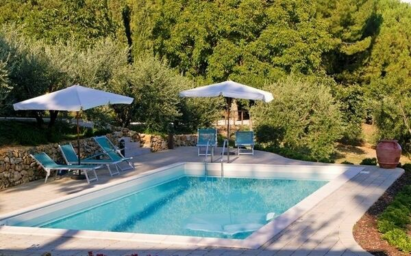 : our pool surrounded by olives