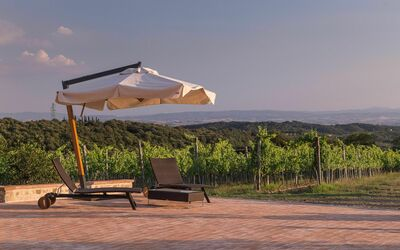 Villa Casanova: Solarium overlooking the vineyards