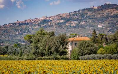 Villa Ivana - Cortona: Sunflowers around the Villa and the view on Cortona