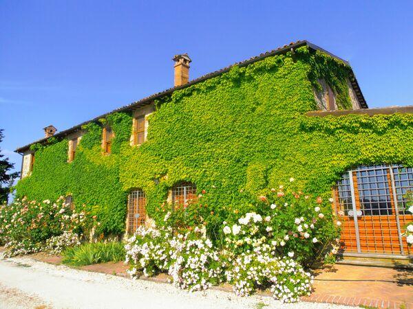 Villa Venanzo, Villa for rent in San Venanzo, Umbria