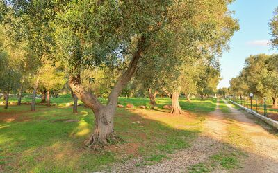 Trullo Delle Ginestre: garden