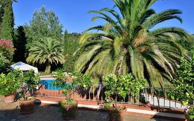 Casa Versilia: villa zum mieten